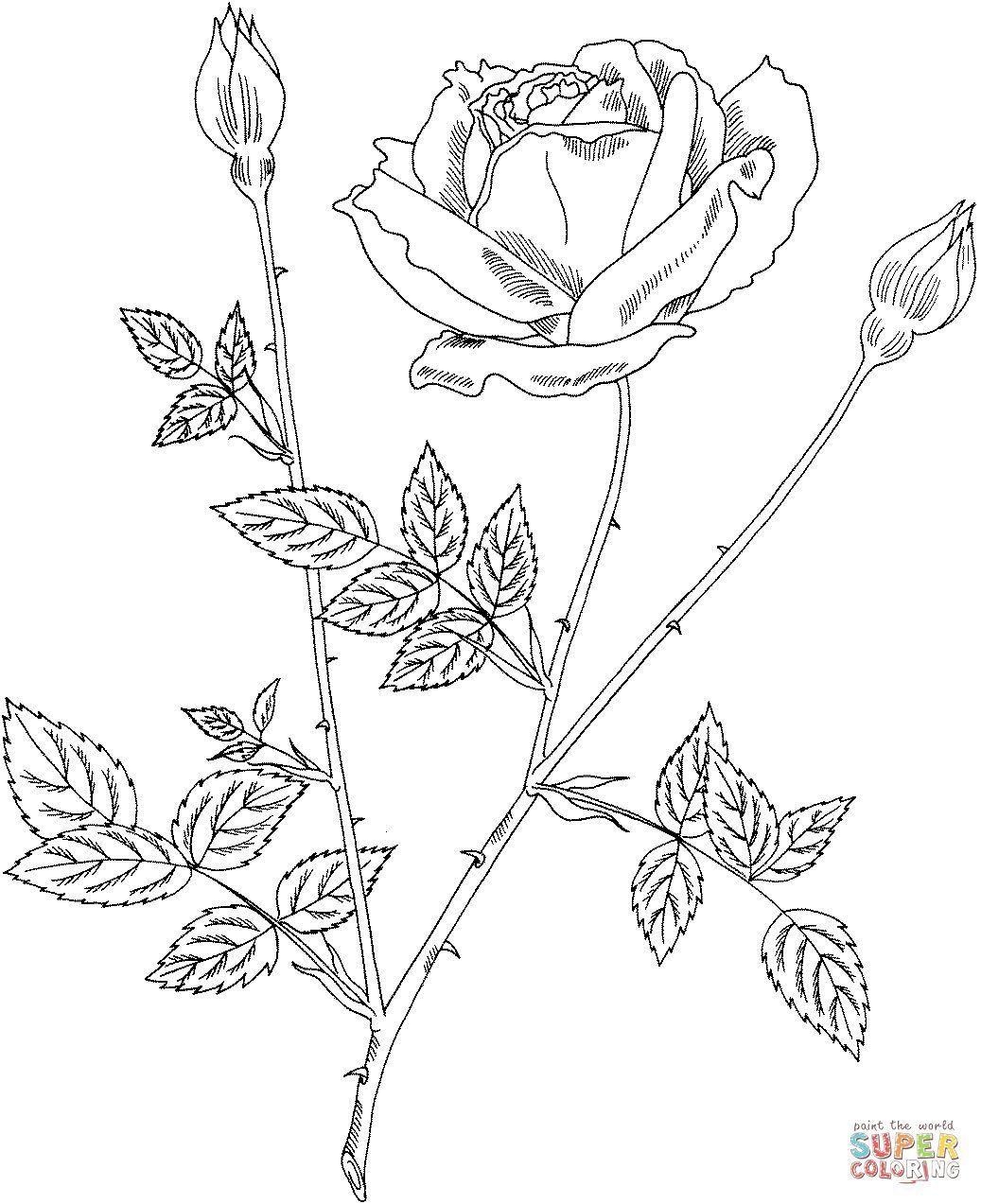 Tổng Hợp Cac Bức Tranh To Mau Hoa Hồng đẹp Nhất Danh Cho Be Coloring Pages Rose Coloring Pages Rose Flower Colors