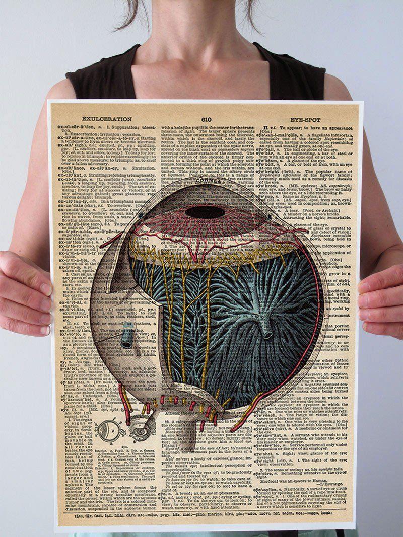 Vintage Eye Anatomy Optometry Art Print | Pinterest | Root words ...