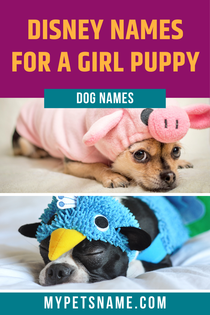 Much Like Their Female Protagonist Owners The Dogs In Disney Movies Are Just As Feisty Witty And Gorgeous Check Out O In 2020 Dog Names Disney Dogs Dog Names Disney