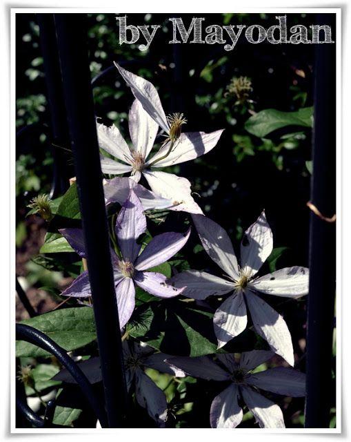 Mein neues, altes Rosenbeet Garten and Gardens - umgestaltung krautergarten dachterrasse