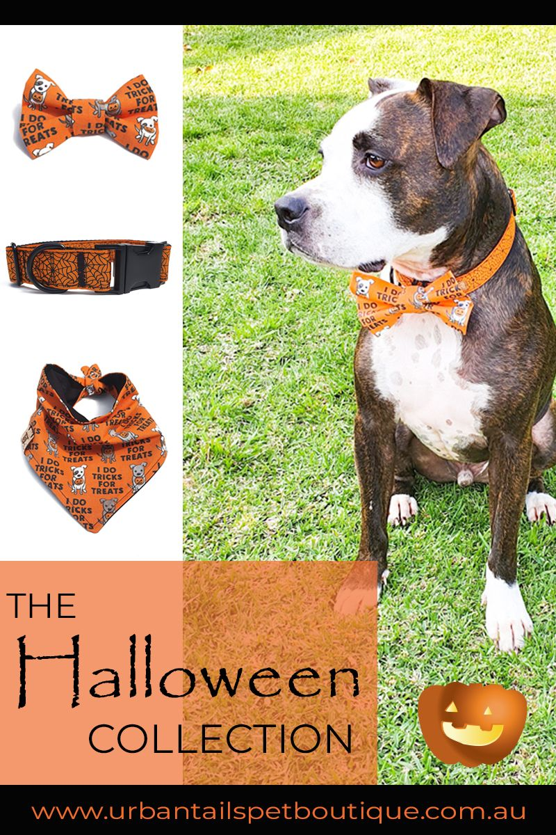 Over the Collar Spider Webs  Gift for Pets  Slip on Bandana Dog  Cat Bandana - Halloween