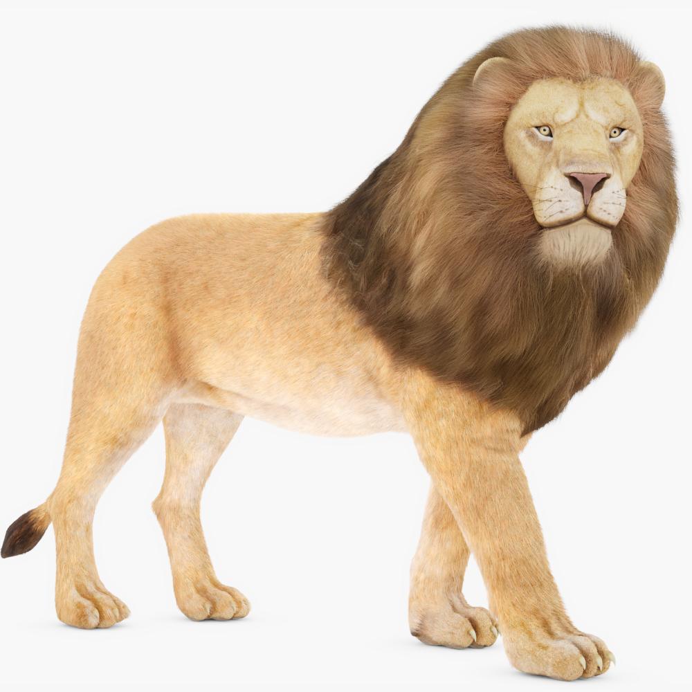 Rigged lion 3D model TurboSquid 1309664