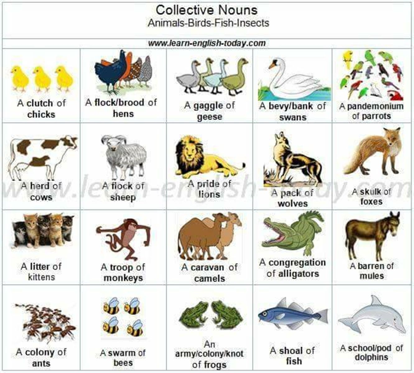 Forum . Fluent LandCollective Nouns in English
