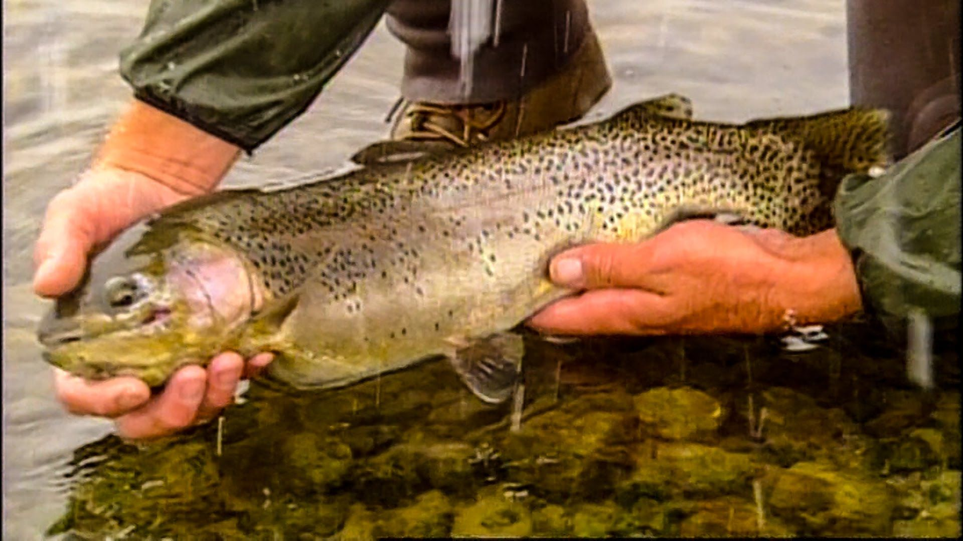 Fishing the best Trout River in the world   Fish, Trout ...