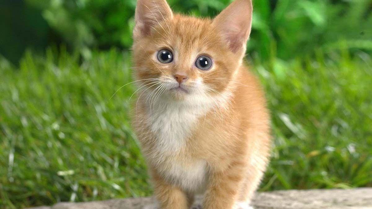 اگر زمین سے تمام بلیاں یک دم ختم ہوجائیں، تو کیا ہوگا