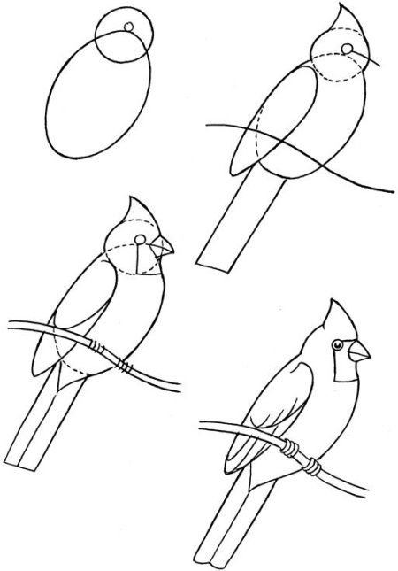 How To Draw Birds How Answers Bird Drawings Drawings Art