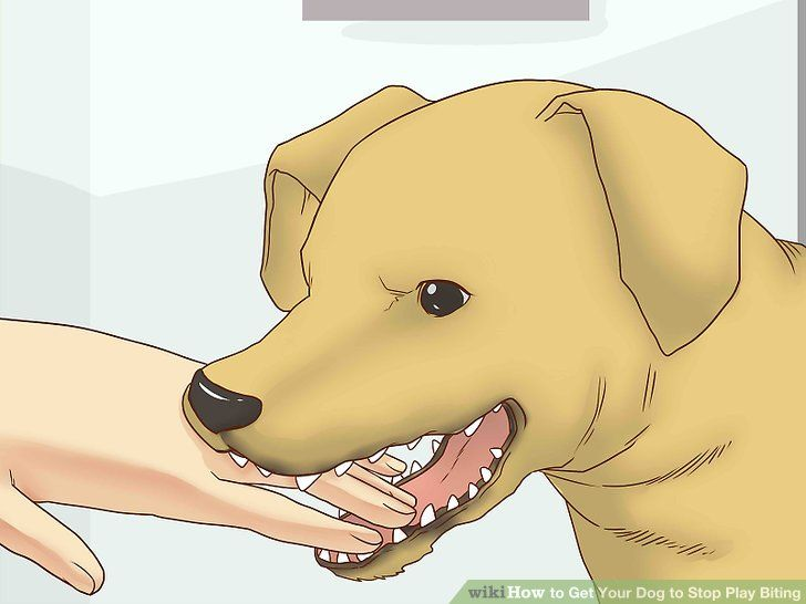 How To Teach Dogs Not To Play Bite In 2020 Dog Potty Training