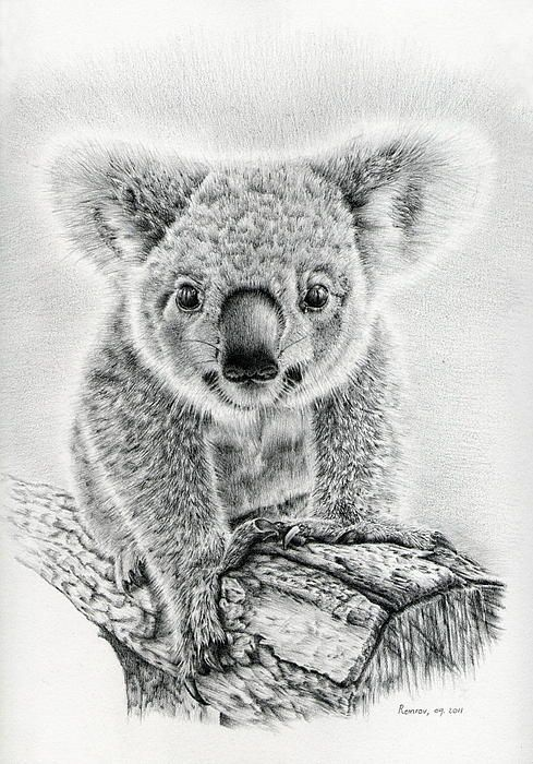 Koala Oxley Twinkles. Heidi Vormer. Fine Art America | I love koalas ...