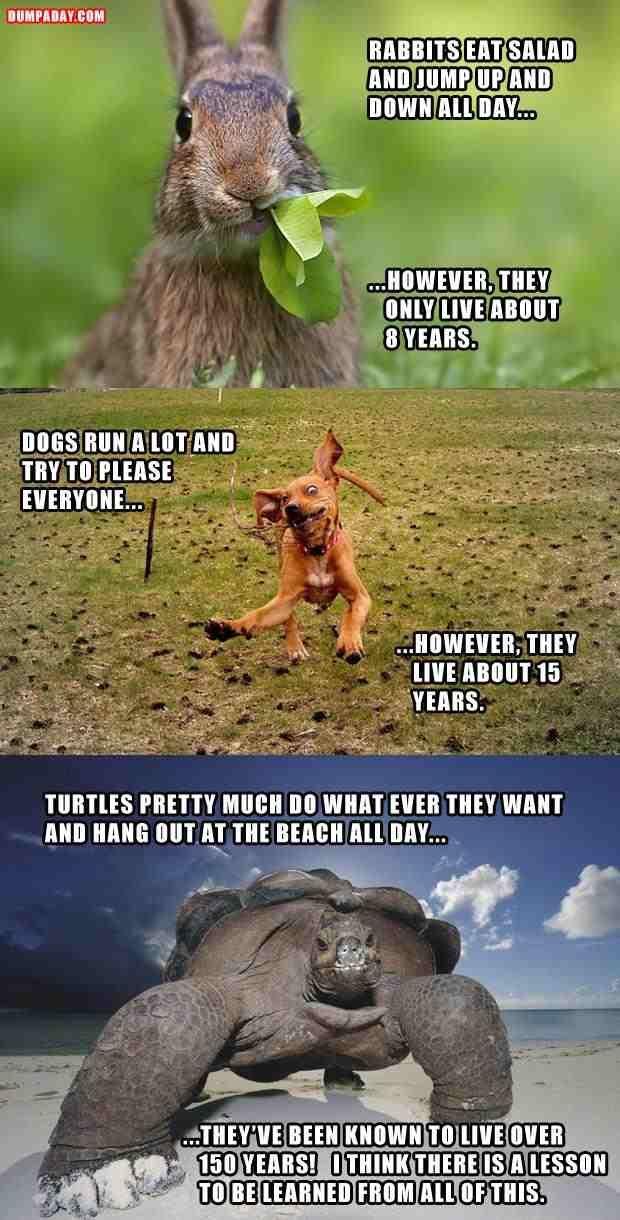 funny jokes wwith animals | Funny animal jokes picture . funny jokes with picture - Pic Fun Pic