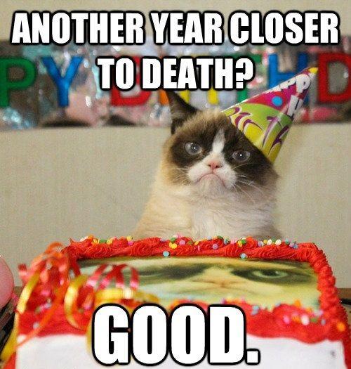 Birthday Cat Meme Generator: Closer To Death - Funny Happy Birthday Meme