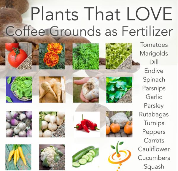 ce2935df3e17b38287fb2e96d3c7373a - Coffee Grounds Good For Vegetable Gardens