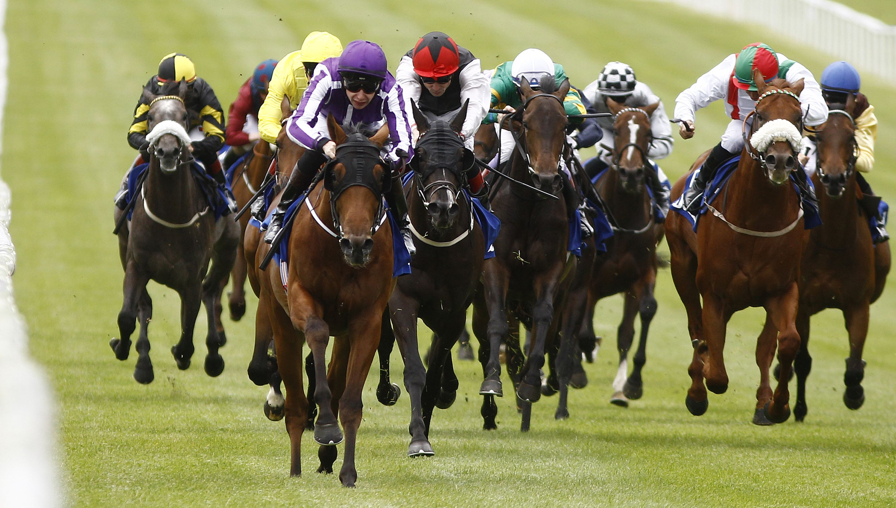 Image result for curragh races