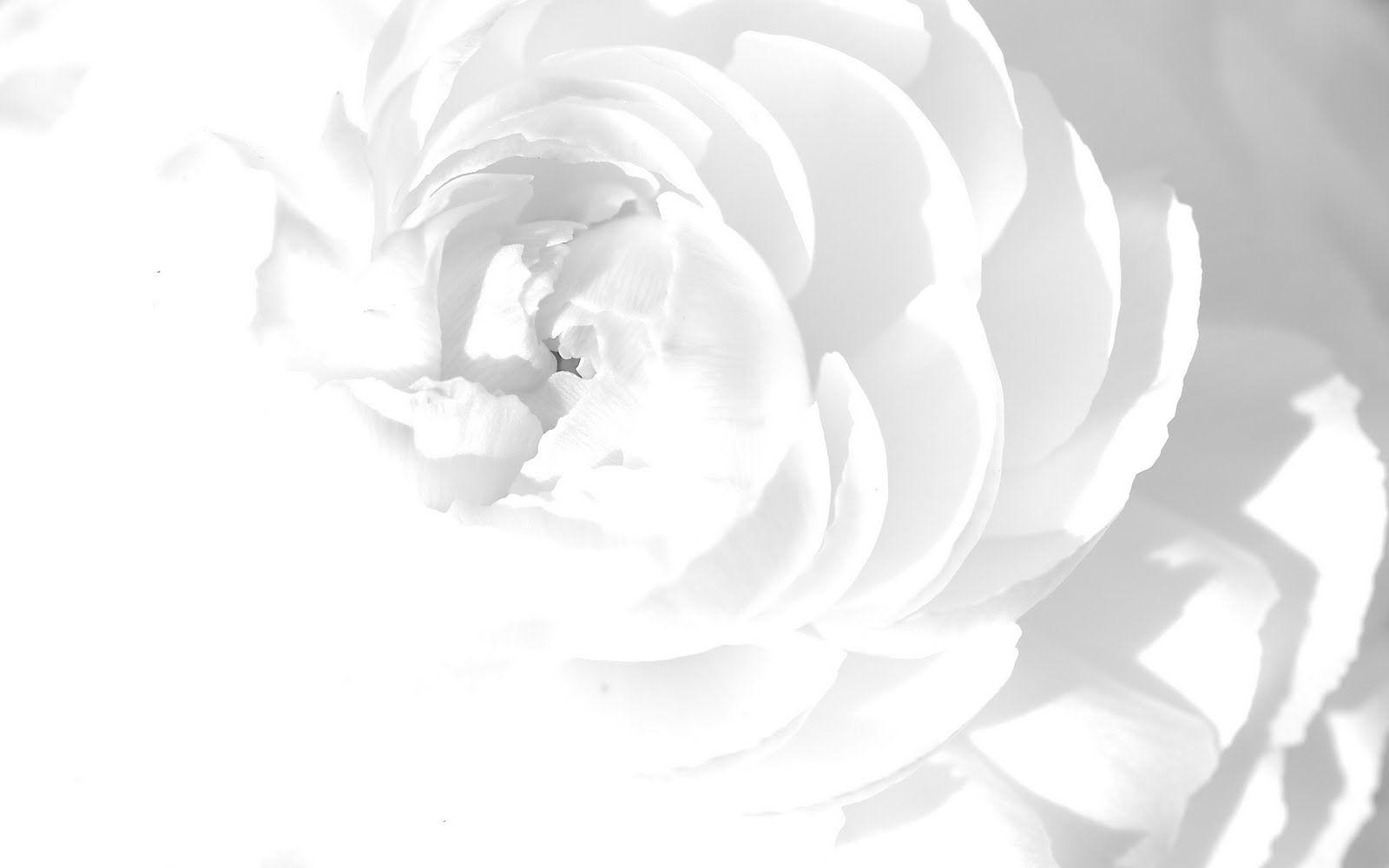 Flowers Wallpapers White Flowers Wallpapers Art Pinterest