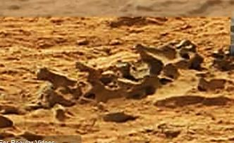 Fossil Spine In Mars Photo From NASA's Curiosity Rover ...