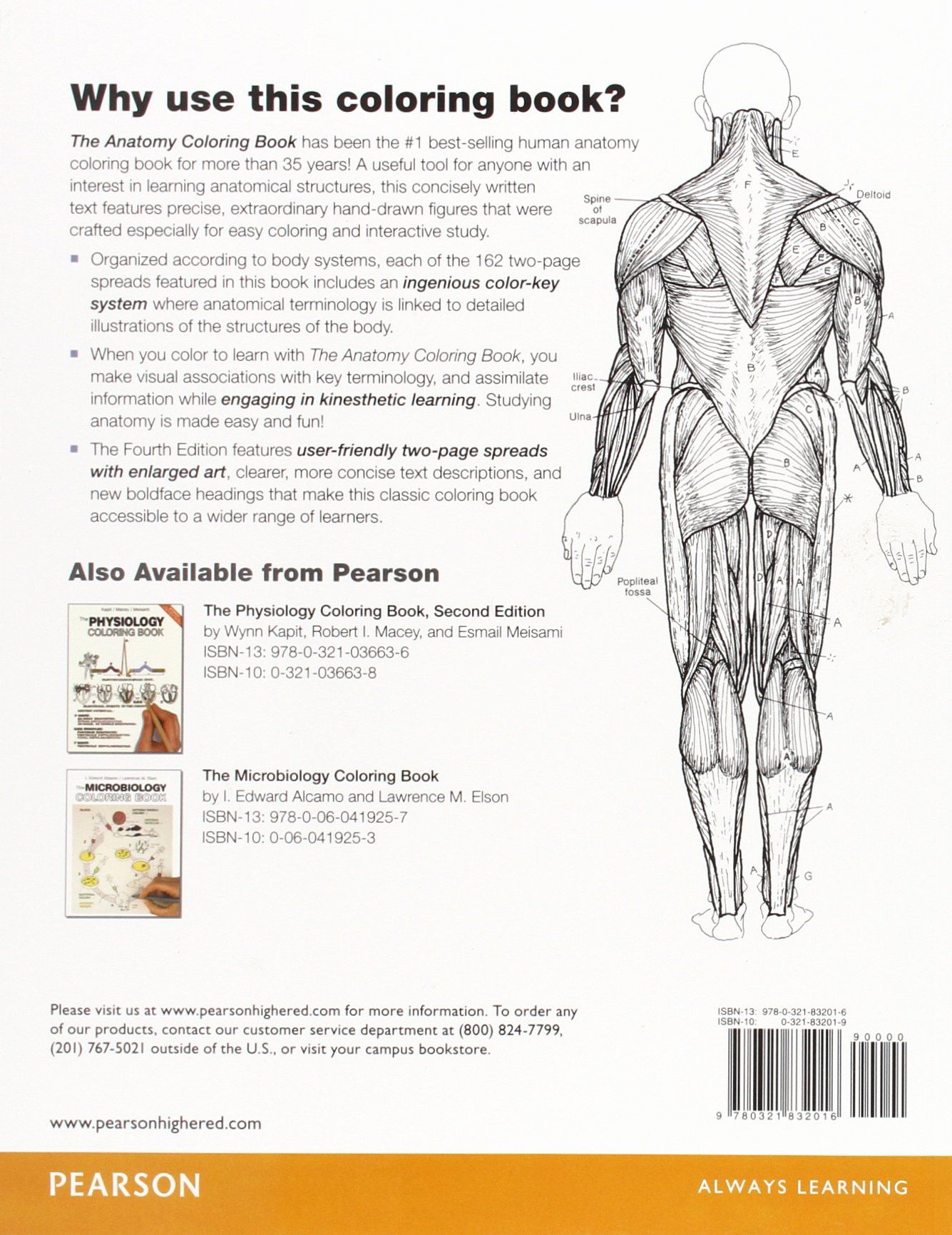 Best Anatomy Coloring Book Inspirational The Anatomy Coloring Book Amazon Wynn Kapit Lawrence M Anatomy Coloring Book Coloring Books Words Coloring Book