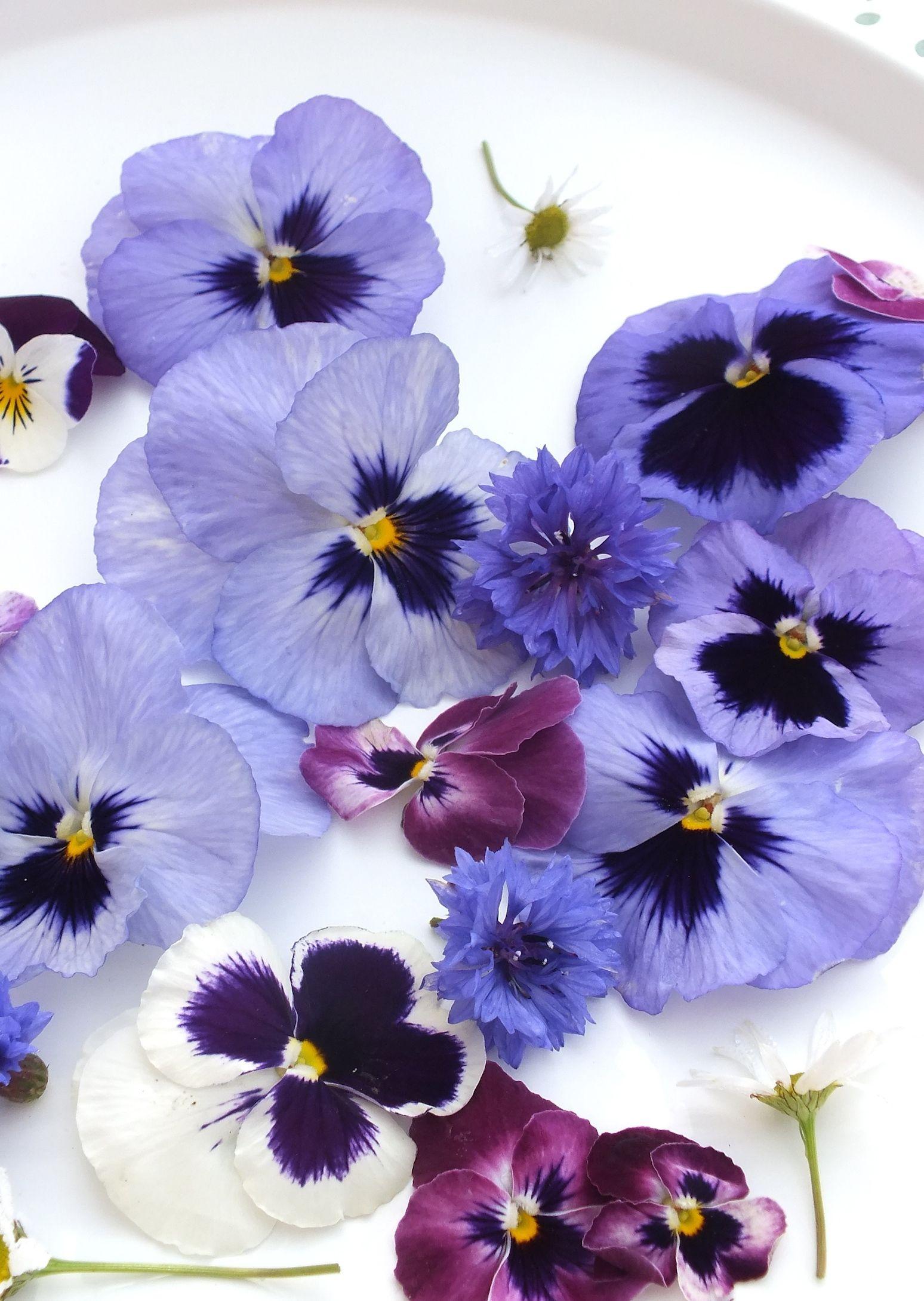 Buy Edible Pansies Fresh Edible Flowers From Maddocks Farm Organics Edible Flowers Pansies Edible