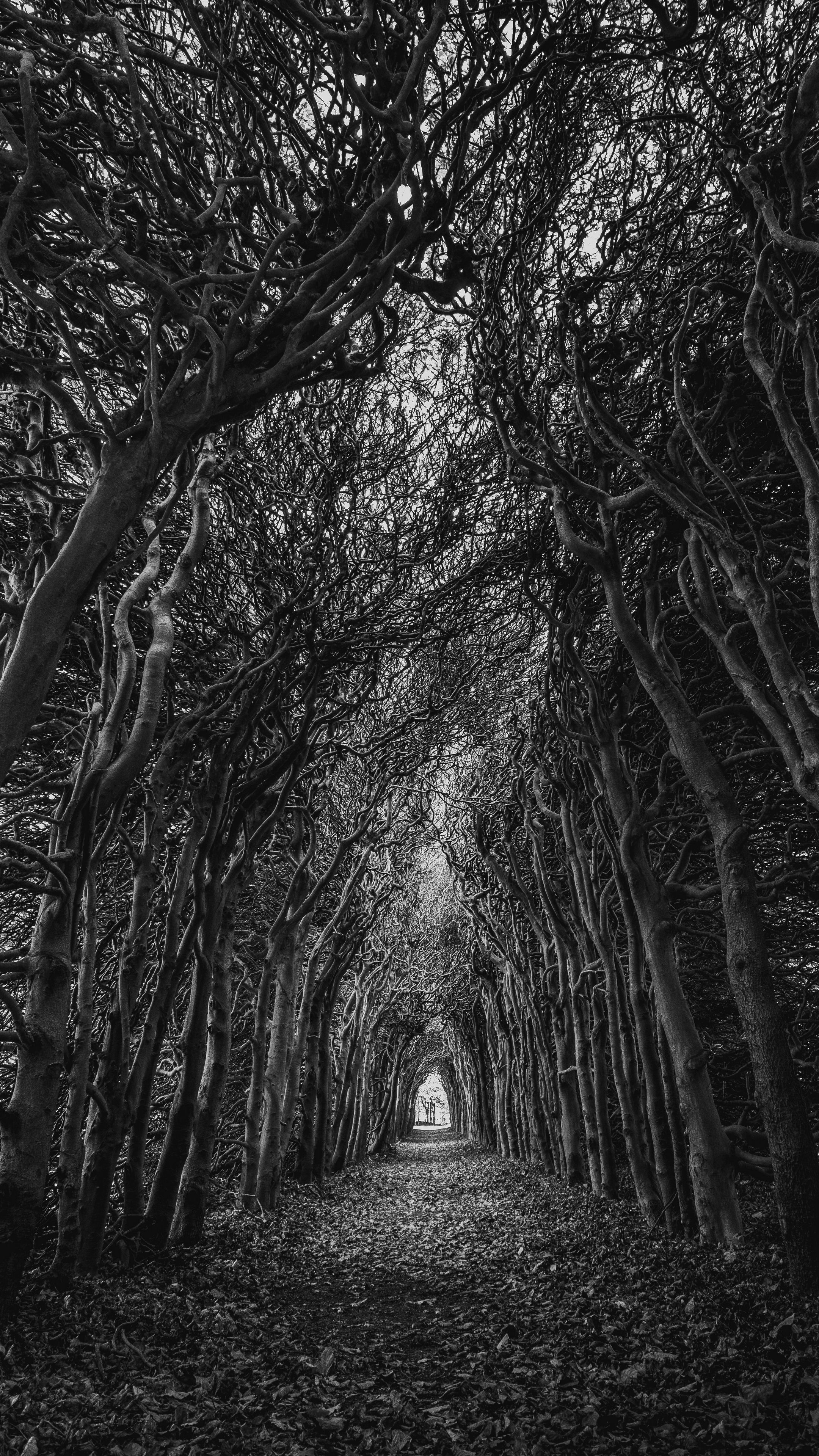 Nature Trees Branches Bw Android Wallpapers 4k Hd Papel De Parede Preto E Branco Papel De Parede Preto Wallpapers Paisagens