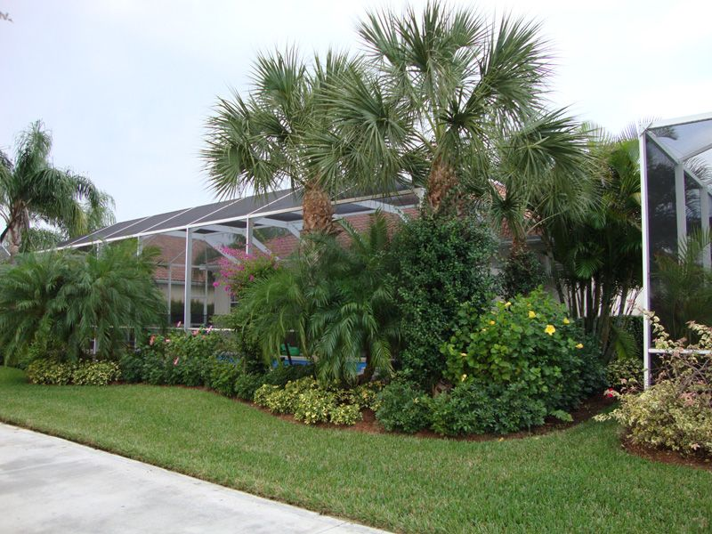 Pool Cages Florida   Cabbage Palms Around Pool Cage   Landscape Ideas   Pinterest   Cabbage ...
