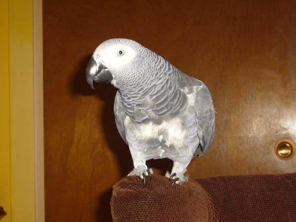 Amazing grey