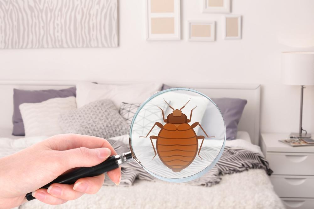 Pin by Atayar on شركة مكافحة حشرات بحائل Bed bugs