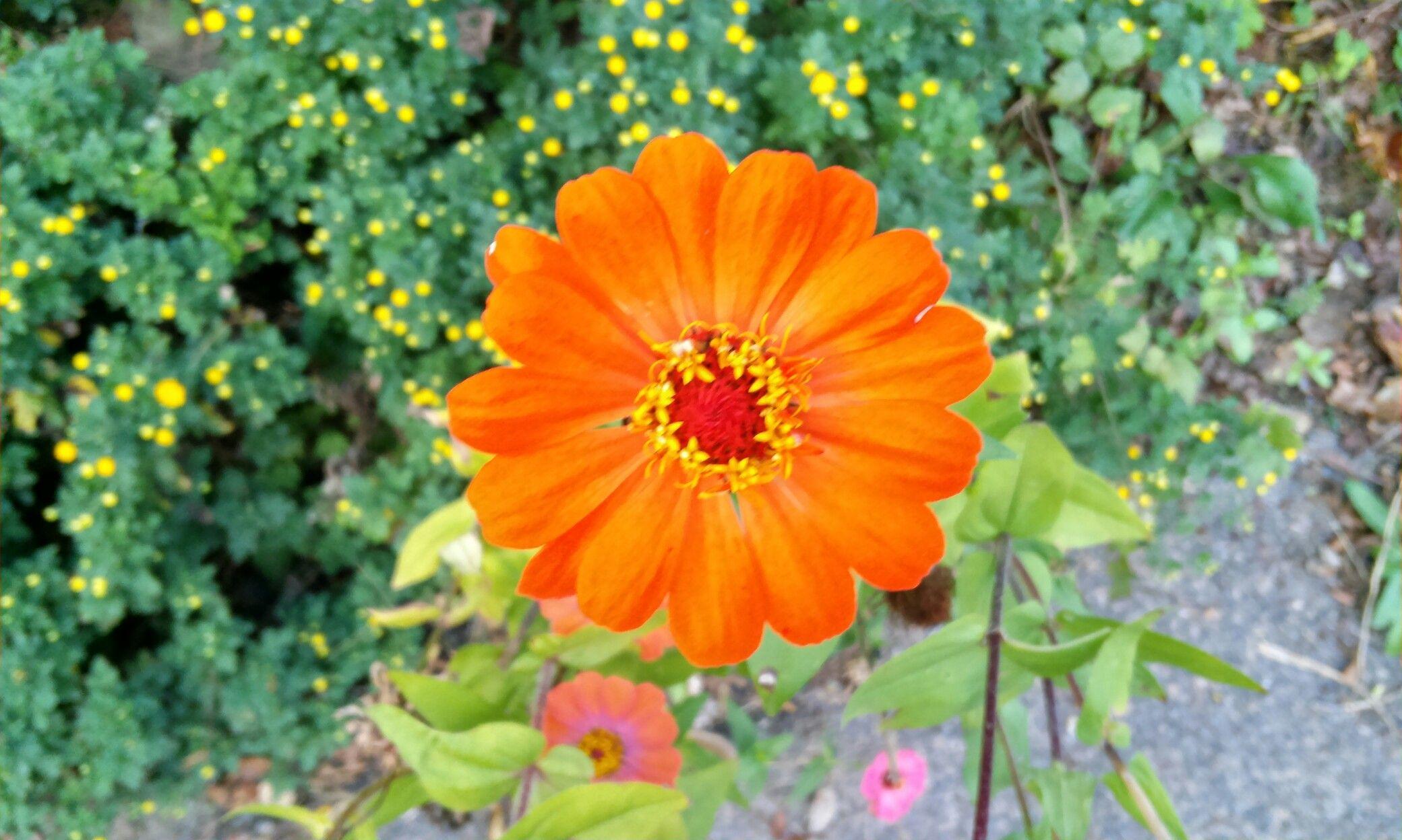 가을 골목 나즈막 꽃