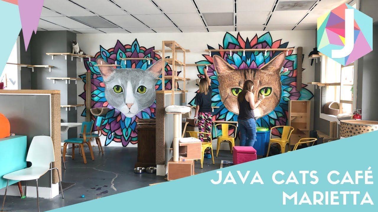 Java Cats Cafe Marietta YouTube Cat cafe, Cats, Cat