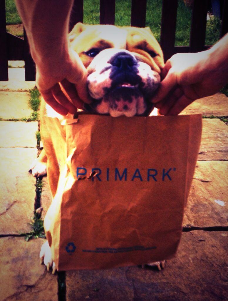 Tank Has Been Shopping On His Day Off Bulldogs Englishbulldog
