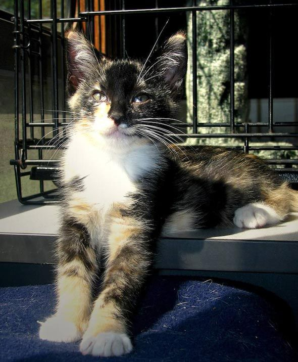 JOANNE: Ebony kittens