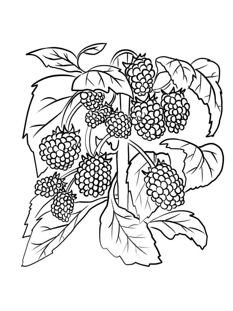 Strawberry Unit Study Strawberry Plants Flower Coloring Pages