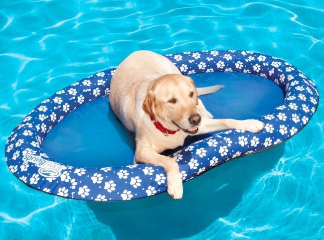 The Canine Pool Float Pool Float for Dogs is specially designed for dogs and made of a tough fabric-covered inflatable 14-gauge PVC ring surrounding a heavy duty 400 denier polyester fabric bed. Steel reinforced construction springs the float open quickly and it folds down to 1/10th it's size in seconds. It comes in $49 small dog and $69 big dog (65lbs and up) sizes.