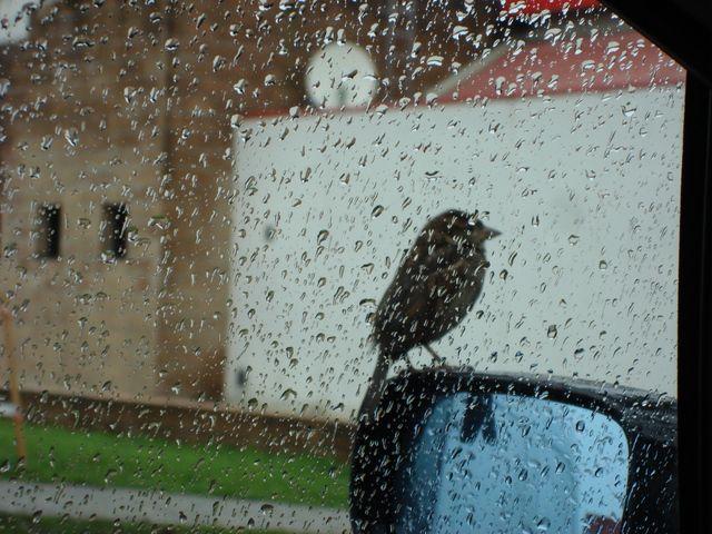Petit Compagnon De Route: Sur une aire d'autoroute un petit oiseau se perche longuement sur le rétroviseur et se laisse photographier. Avec le zoom les bâtiments ingrats de la station prennent une allure moyenâgeuse. #travel #france