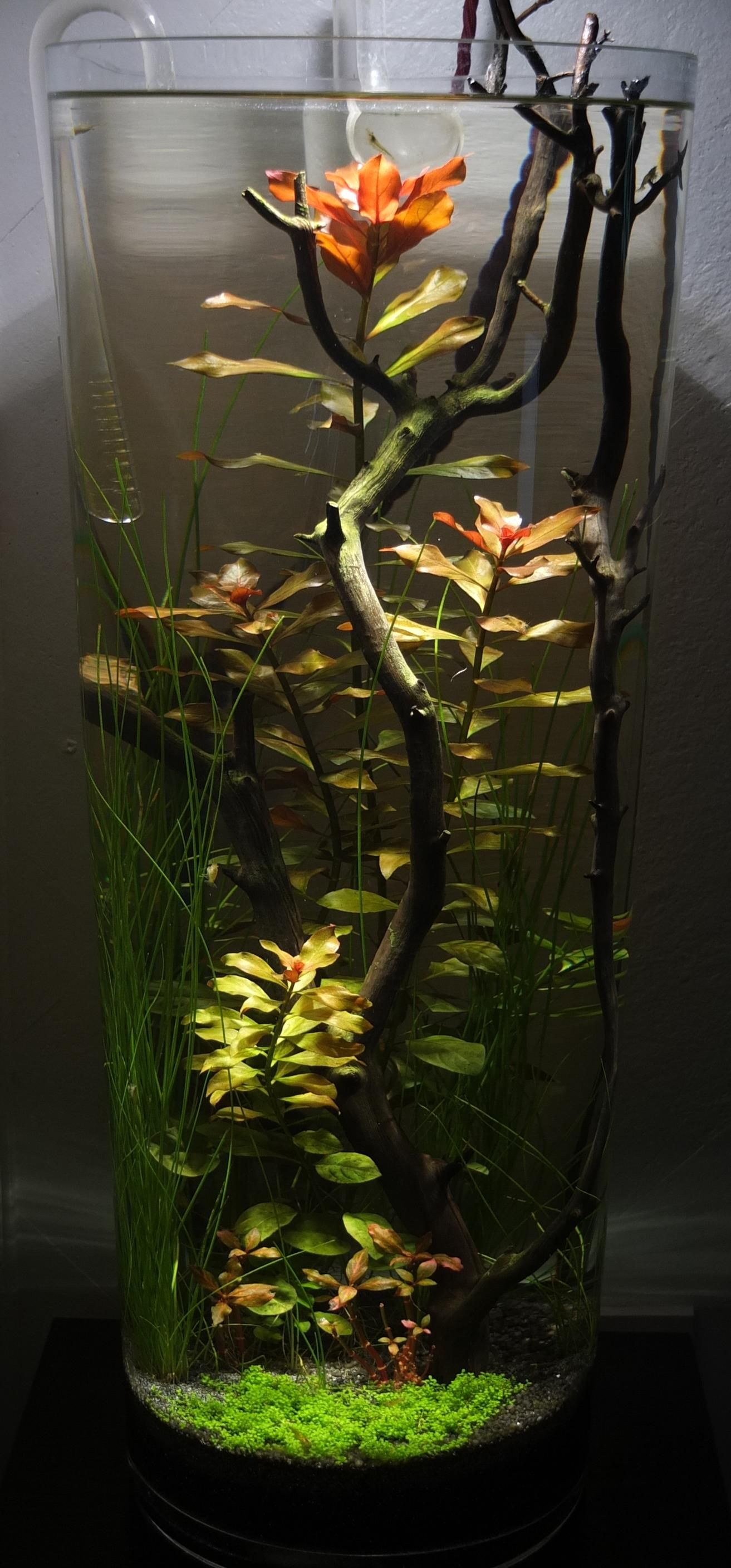 My vase tank a few months in terrariums pinterest aquarium