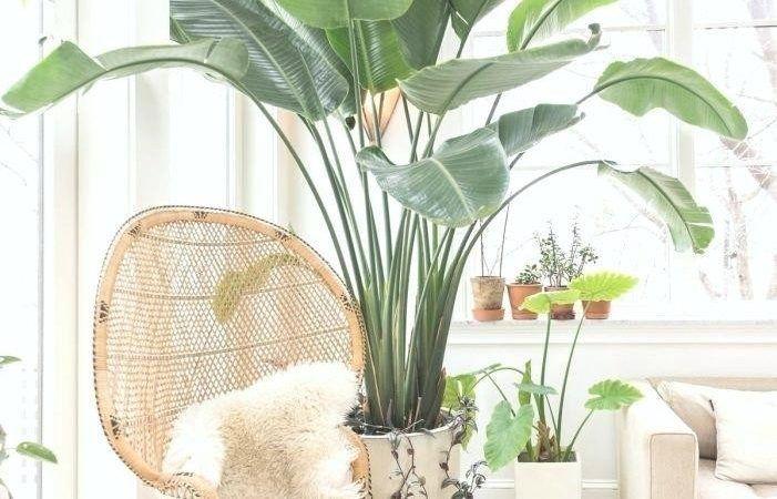 Diese Jahr Schlafzimmer Pflanzen Feng Shui Ideen Sind