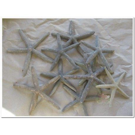 Zeester Starfish Greyblue 10 15cm 10 Stuks Schelpenboeket Zeester Schelpenschilderij