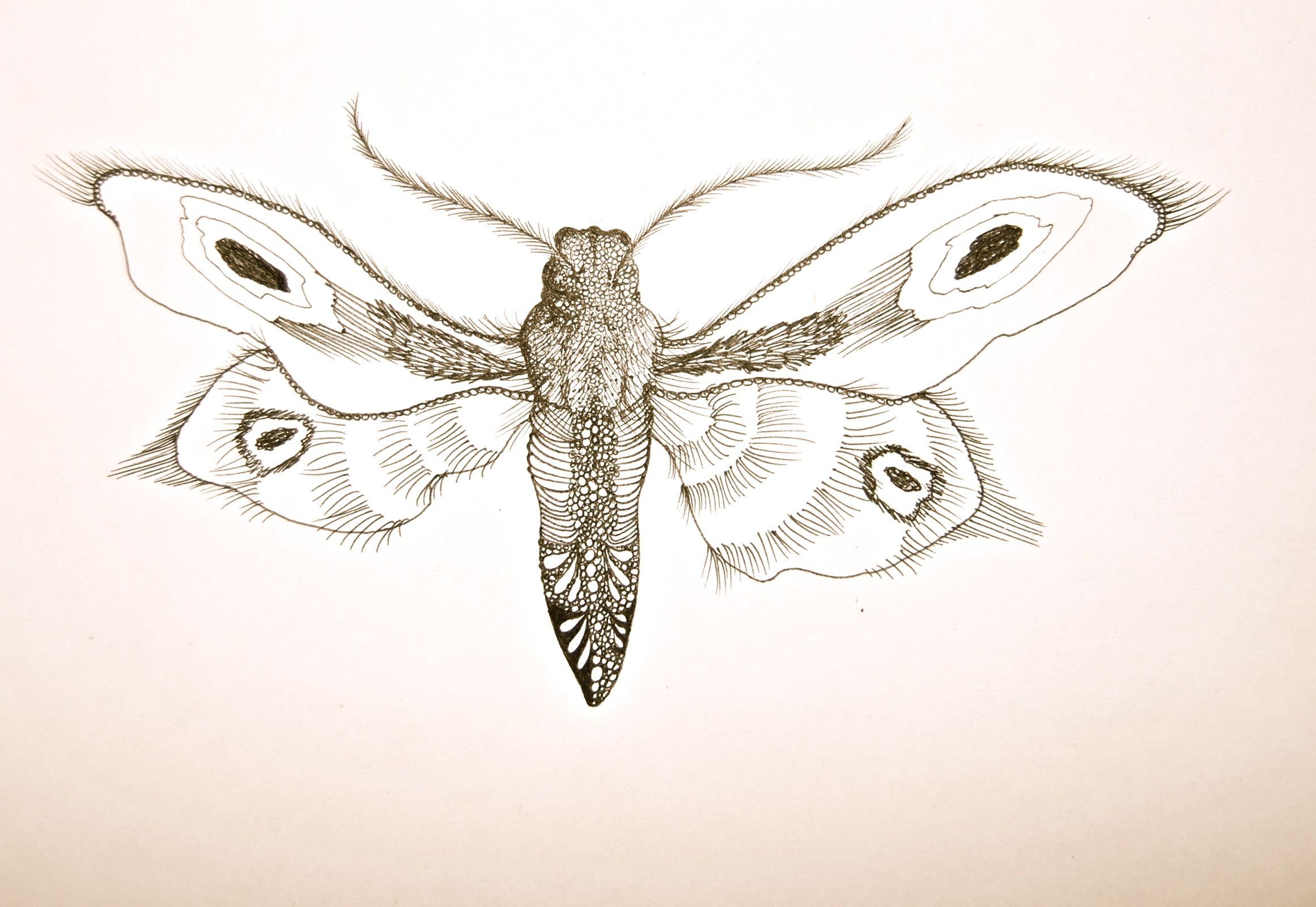 This delicate drawing of a moth is inspired by my Mother's ...