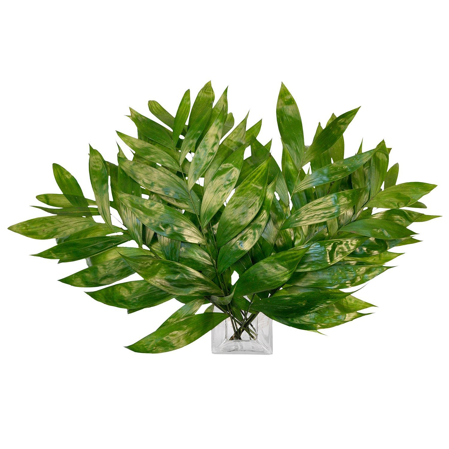 Commodore Palms (150 stems) Bulk flowers online