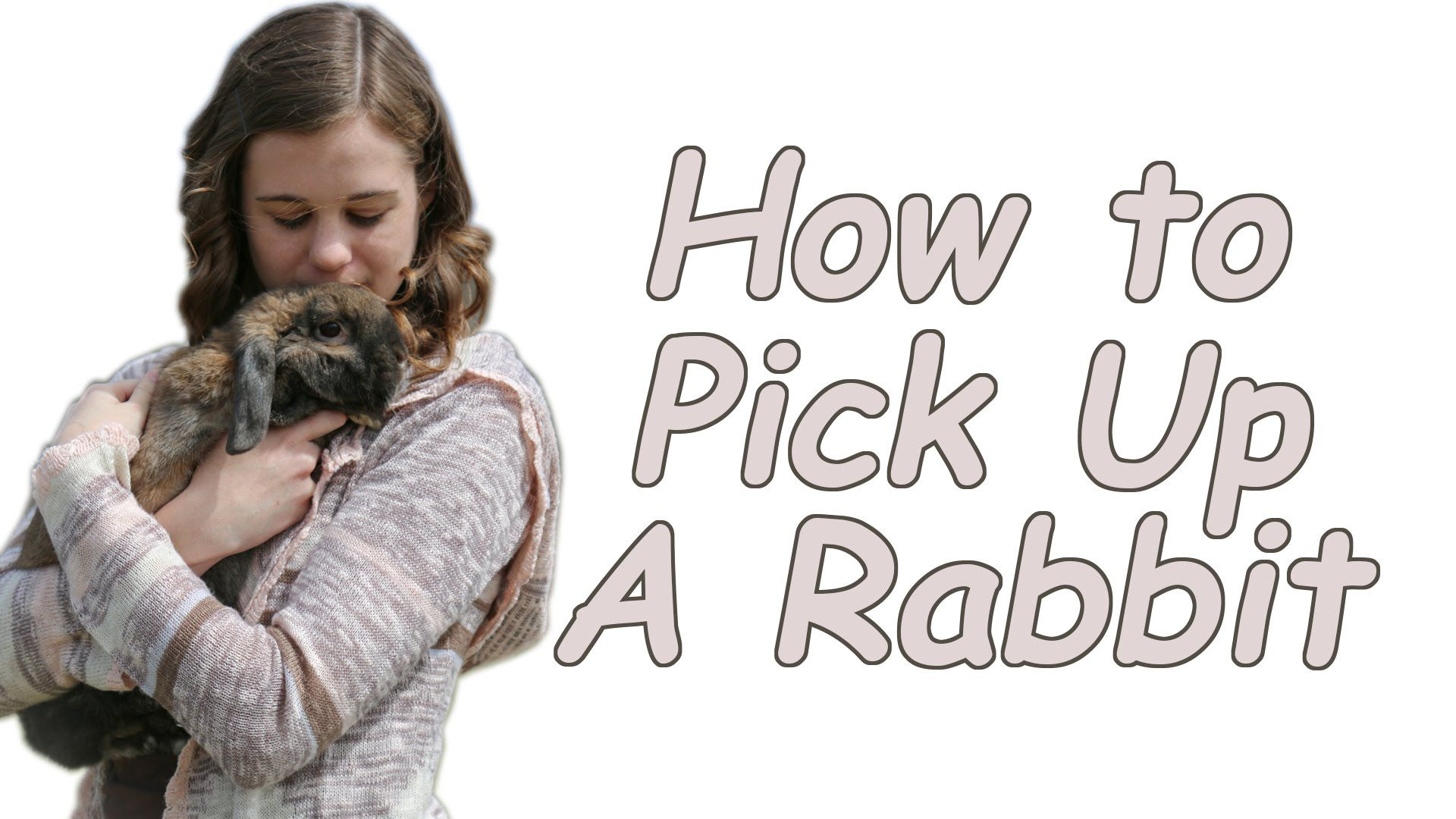 How To Pick Up And Hold A Rabbit Pet Bunny Rabbit Show Rabbits
