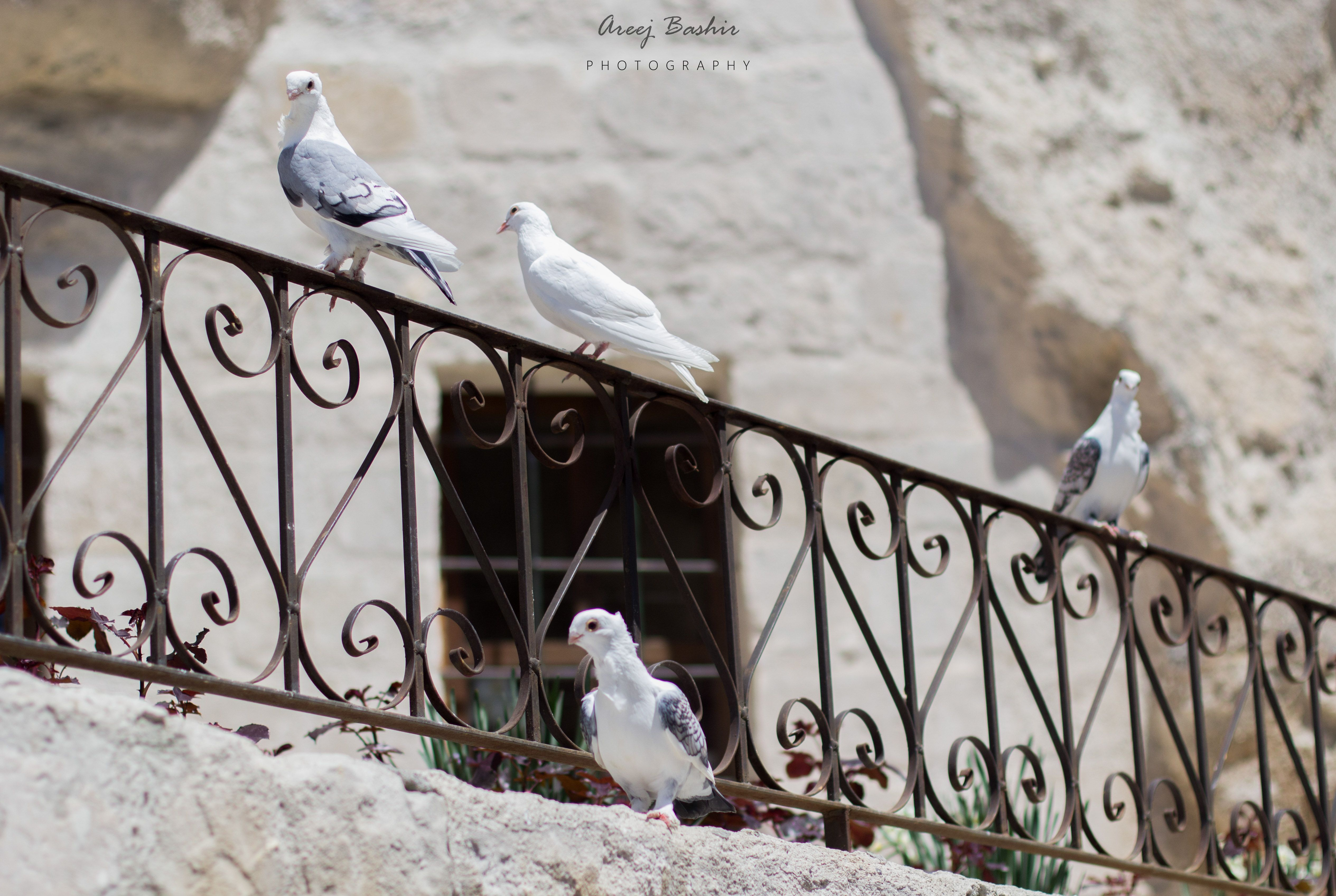 walking around Goreme town and you come across all sorts of cute and spectacular things.