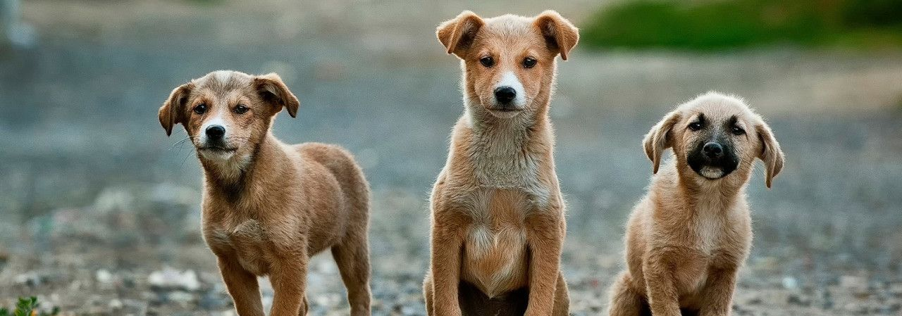 Can't adopt but want to support shelter pets? Here are