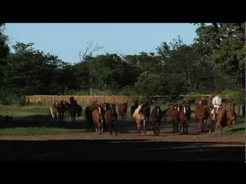 """Domador: """"Polito"""" Ulloa, el hombre que se entiende con los caballos - YouTube"""