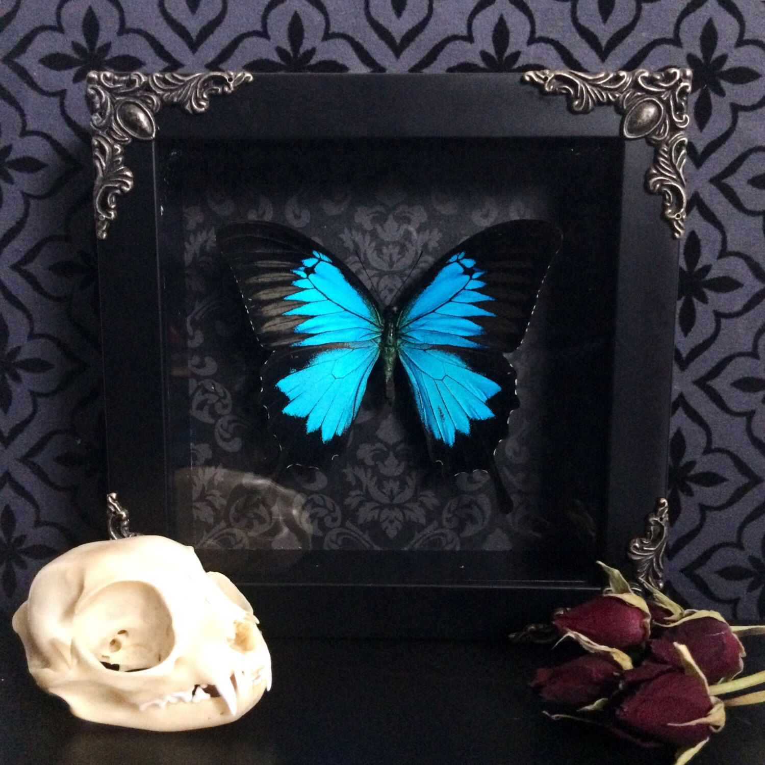 Modern Gothic Decor victorian blue swallowtail butterfly shadow box, framed butterfly