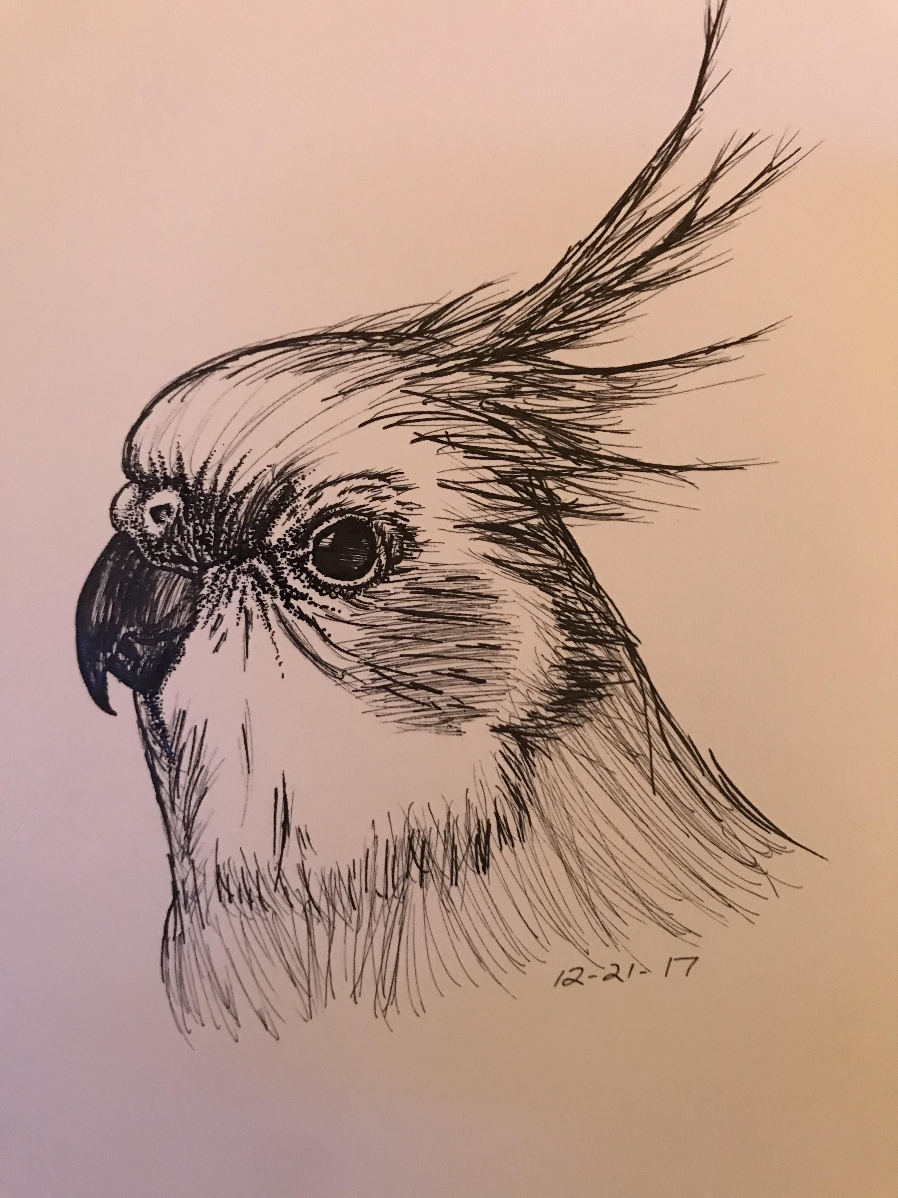 Cockatiel Sketch Original