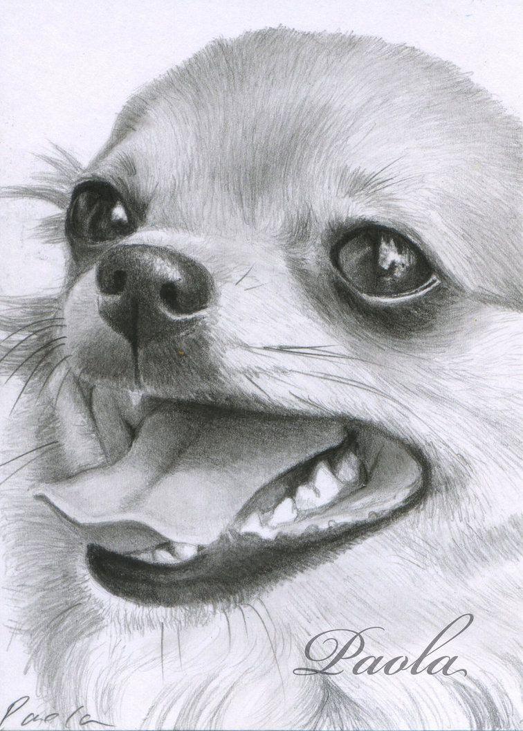 Dachshund Clube   Mascotas   Pinterest   Hund malen, Bildwände und Hunde