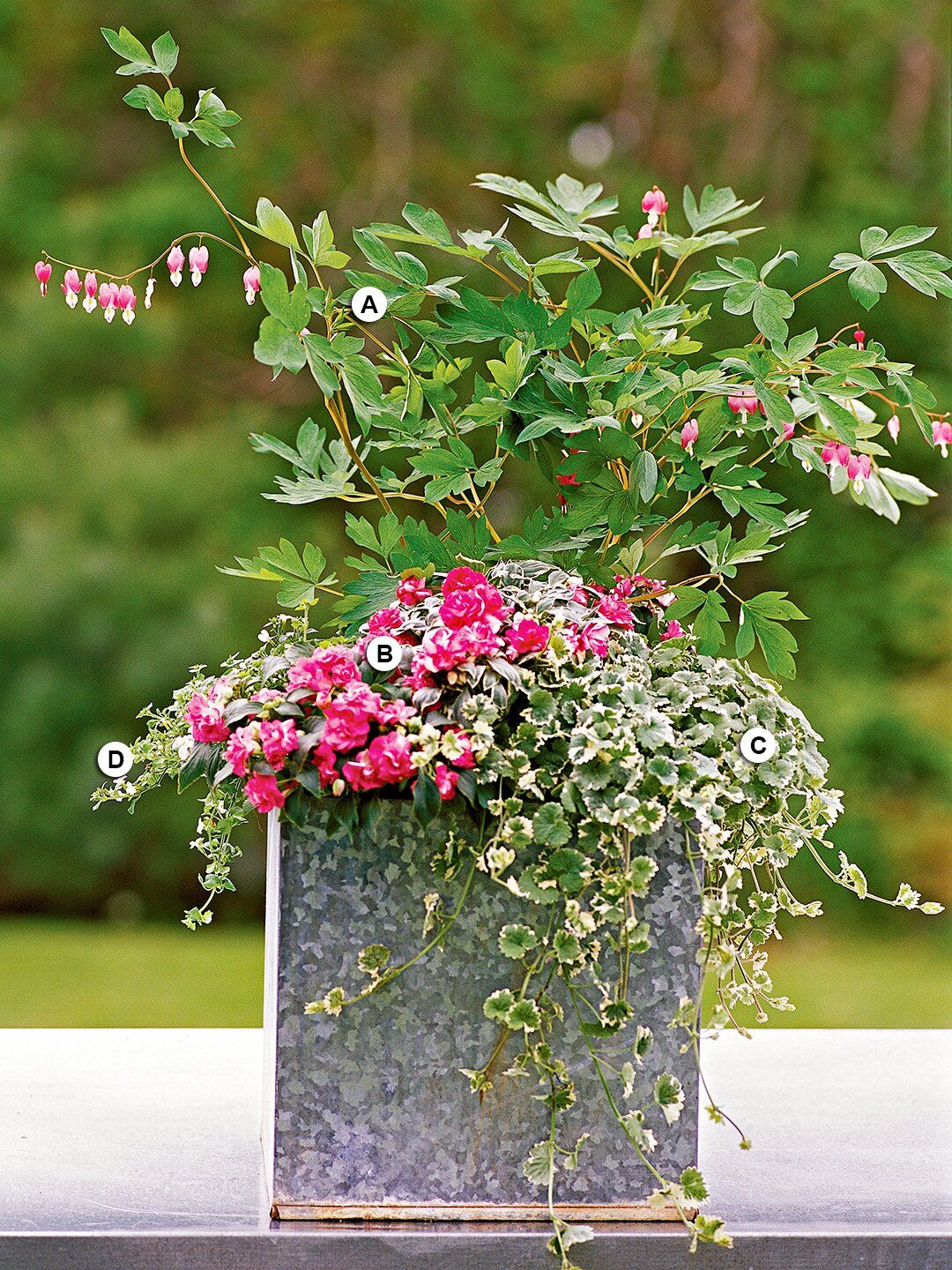 36 Container Garden Recipes For A Stunning Display In 2020 Container Gardening Salad Container Garden Porch Flowers