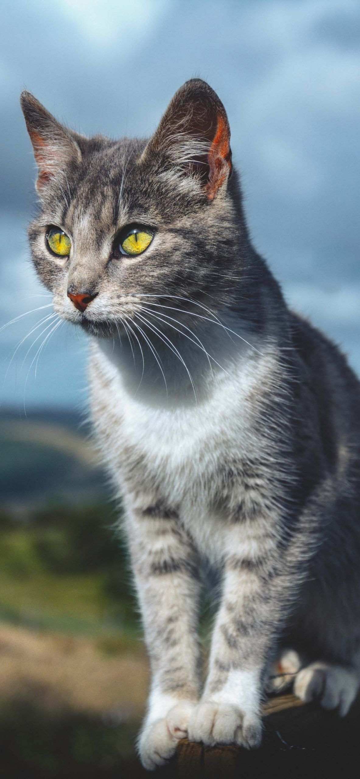 Cat Wallpapers for Phone 2021 – I Like Cats Very Much
