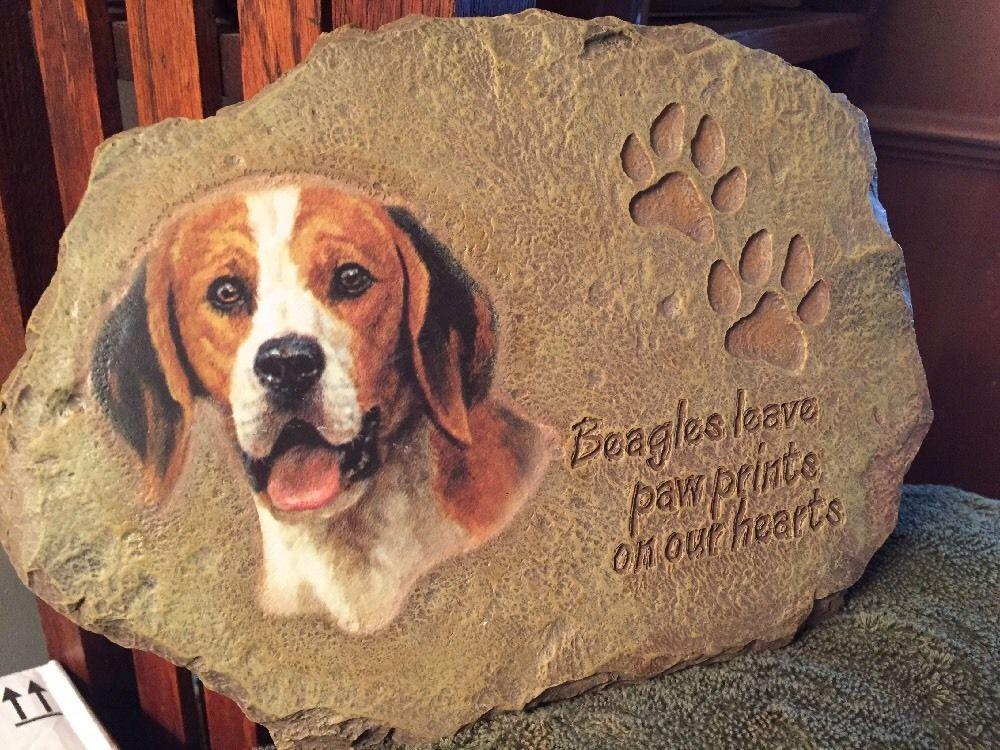 Beagle Color Variations Cute Beagles Beagle Puppy Beagle Colors