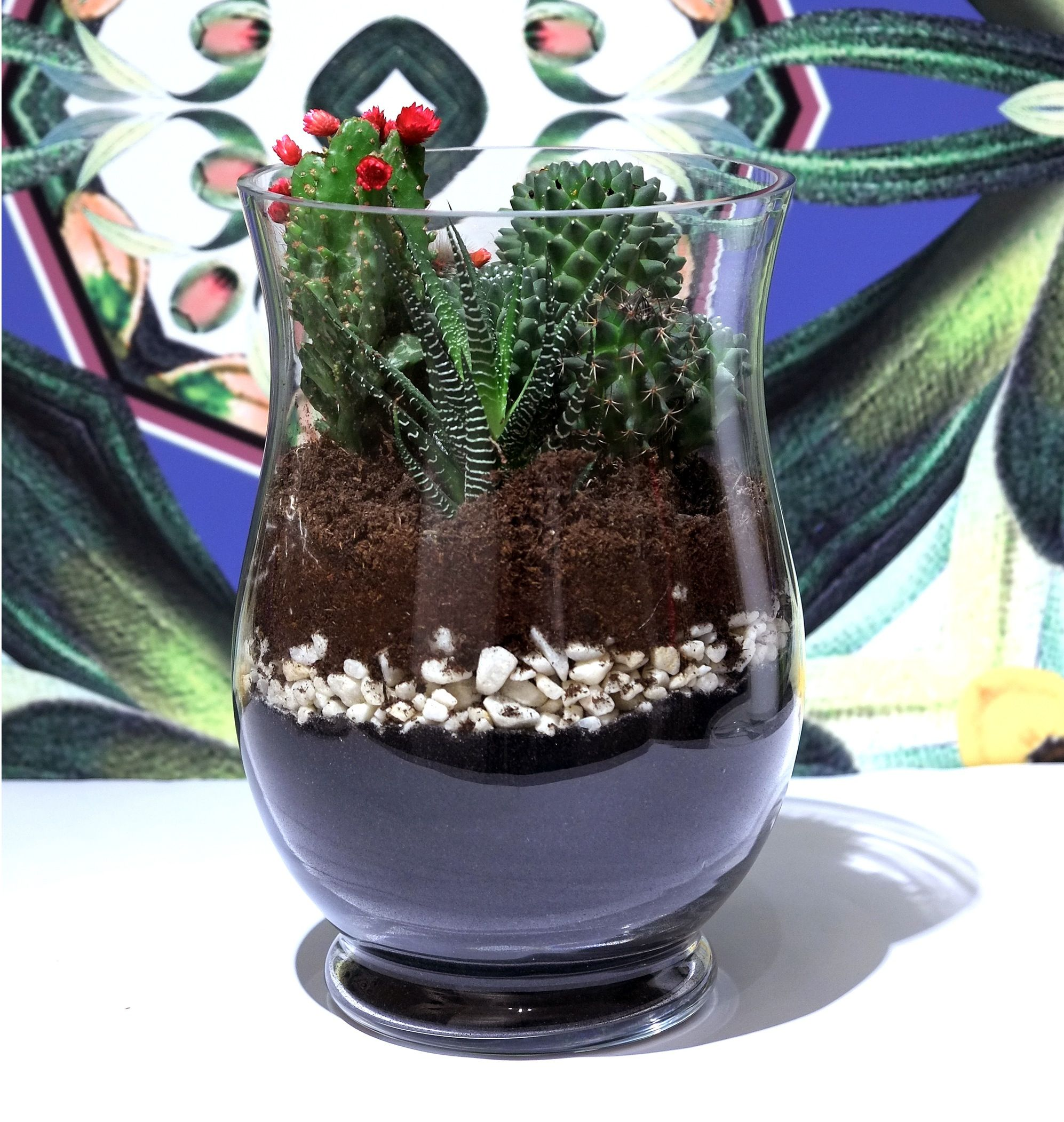 Lovely Glass Hurricane Jar Terrarium filled with beautiful stones and topped up with Cacti