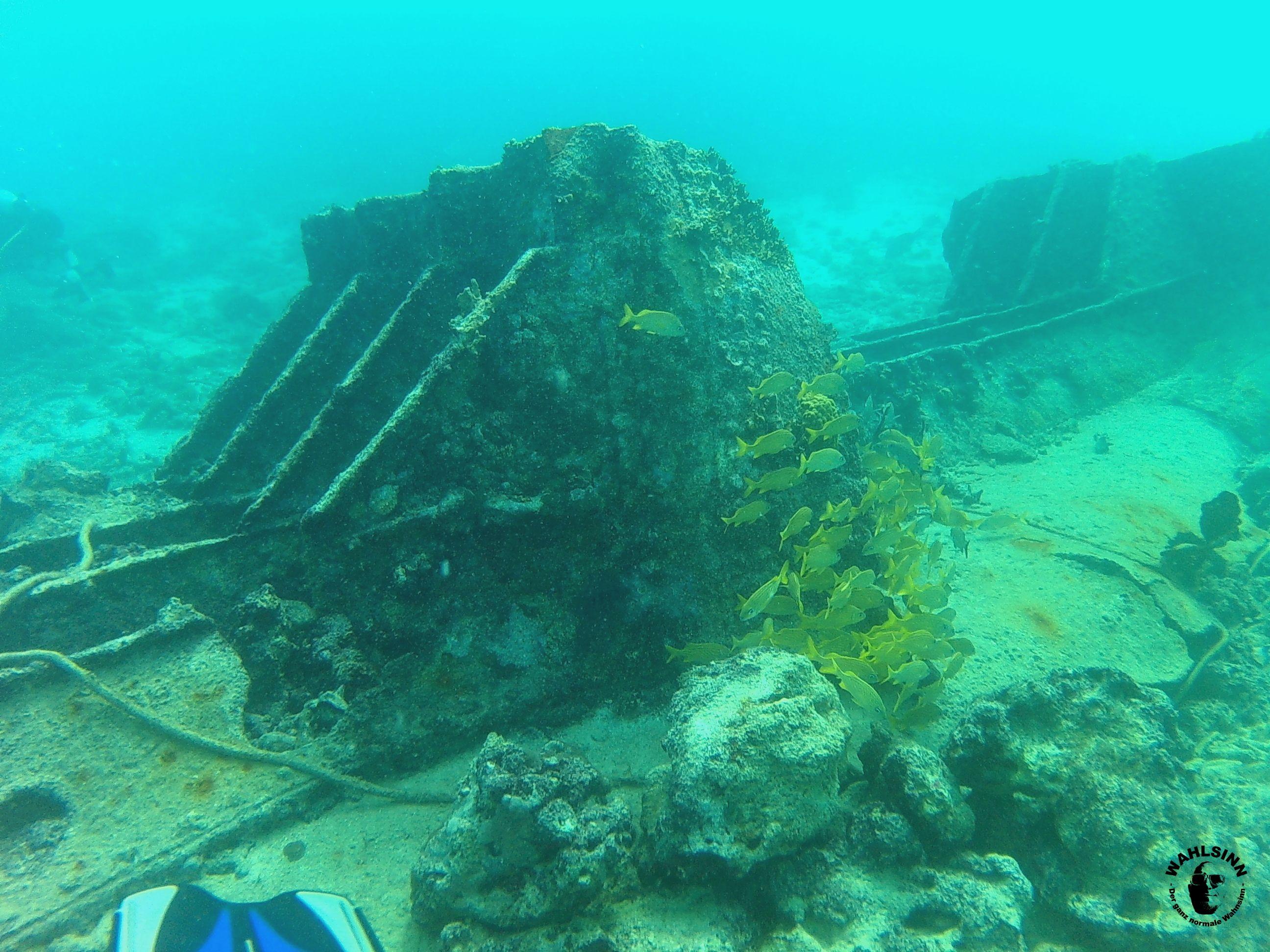 Aruba - auch oft unter Wasser zu sehen, Fische UND Wracks. Und JA, die Flosse da ist meine..... :-/