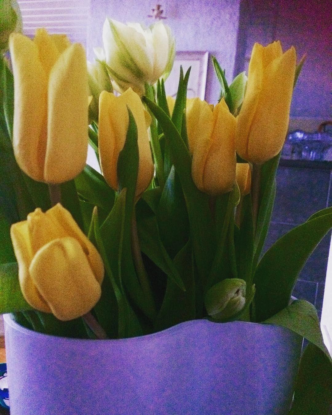 Kevät ❣️#tulppaanit #tulips #aaltomaljakko