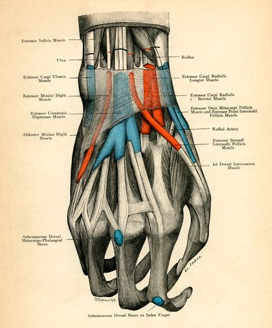 Medical    Diagram    of    Human       Hand    Repinned by SOS Inc
